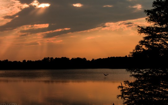 Heron flying on Jacobson Lake Sunset Parham P Baker Photography