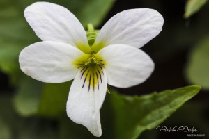 White Glory - Parham P Baker Photography
