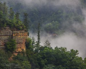 Fog in the gorge
