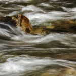 Rock in Rocky Mountain Stream Parham P Baker Photography