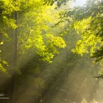 Light Playing in the Woods Near Red River - Parham P Baker Photography