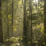 Light Playing in the Gorge - Parham P Baker Photography