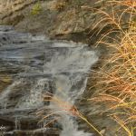 Grasses against waterfall - Parham P Baker Photography
