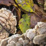 Fungus and Leaves - Parham P Baker Photography