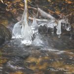 Cold Stream Copperas - Parham P Baker Photography