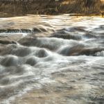 Golden Riffles - Parham P Baker Photography