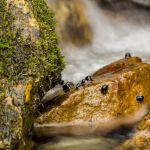 Snail Rock II - Parham P Baker Photography