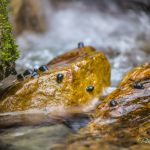 Snail Rock - Parham P Baker Photography
