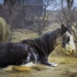 Horse and Hay - Parham P Baker Photography