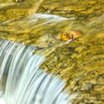 Rusty Rock in Creek - Parham P Baker Photography