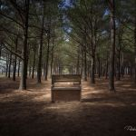 Piano in the Pines - Parham P Baker Photography