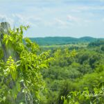 Mountain View with Vine Covered Fence Post - Parham P Baker Photography