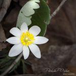 Wonder of Spring - Parham P Baker Photography